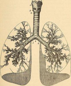 Anatomy,_physiology_and_hygiene_(1900)_(14779222815)