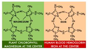 heme-chlorophyll